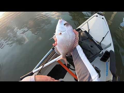 Kayak Fishing Brisbane River