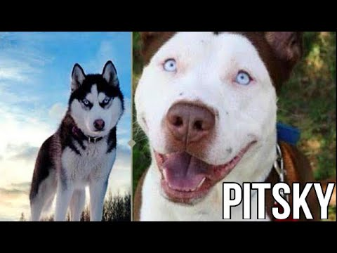10 Incredible Mixed Breed Dogs - Universal Videos - 2
