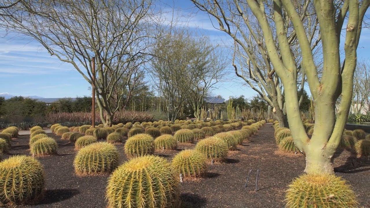 In The Garden Sunnylands Center Gardens In Rancho Mirage California Youtube