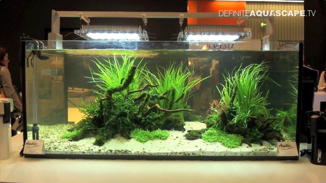 Aquarium ideas from InterZoo 2014 (pt. 19) - Sicce - YouTube
