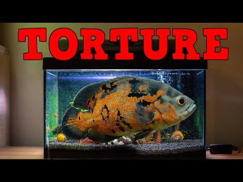 Download Fish Will Only Grow To The Size Of The Tank! T.O.O.L. Ep.  3 Mp4 baru