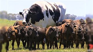World's Most Expensive Animals (2019)