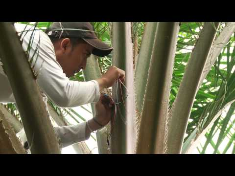 CRC 990, Efforts, functions of tropical lowland rainforest transformation systems, Indonesia