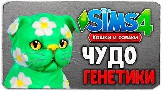 """ЧУДО ГЕНЕТИКИ, НЯШНЫЕ КОТЕЙКИ - The Sims 4 """"Кошки и Собаки"""""""