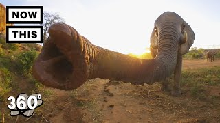 Visit a Baby Elephant Orphanage in Kenya | Unframed by Gear 360 | NowThis thumbnail