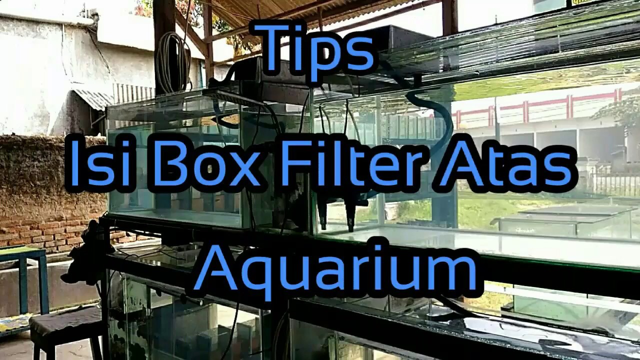 Tips Isi Box Filter Atas Aquarium