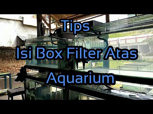 #Tips# Isi Box Filter atas aquarium