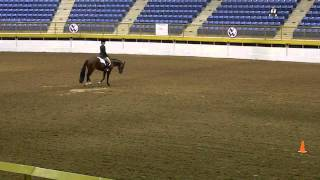 Good Dream Machine AQHA Equitation