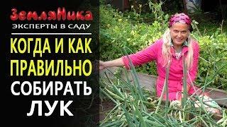 видео Хранение плодов » Садоводу, дачнику, огороднику.