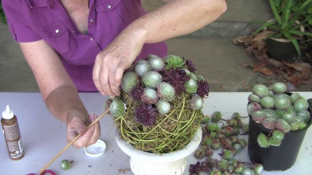 Succulent Topiary Orb Youtube