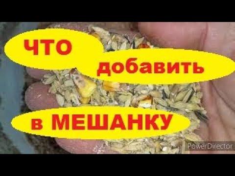 Яйценоскость Кур Несушек//Состав Мешанки для Кур//Можно ли Давать Курам Хлеб?