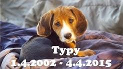 Suomenajokoira Typyn elämäntarina (2002-2015)