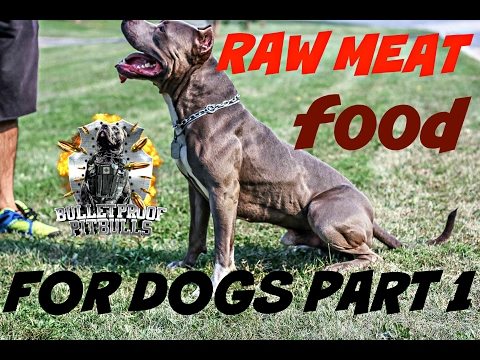 The raw on a raw diet bulletproof way muscle building raw meat dog puppy pitbull