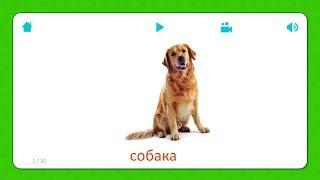 Собака - Карточки Для Детей - Домашние Животные - Карточки Домана
