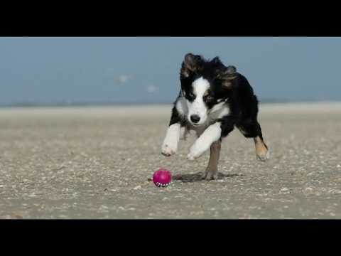 Top 10 | Border Collie | Interesting Facts