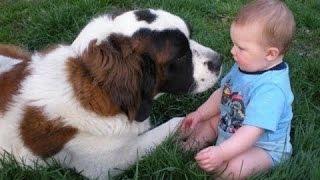Большие собаки играют с маленькими детьми. Сборник 2016