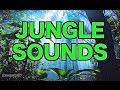 Download 8 Hours of Jungle Sounds | Ambient Nature Sounds for Relaxation HD MP3 song and Music Video