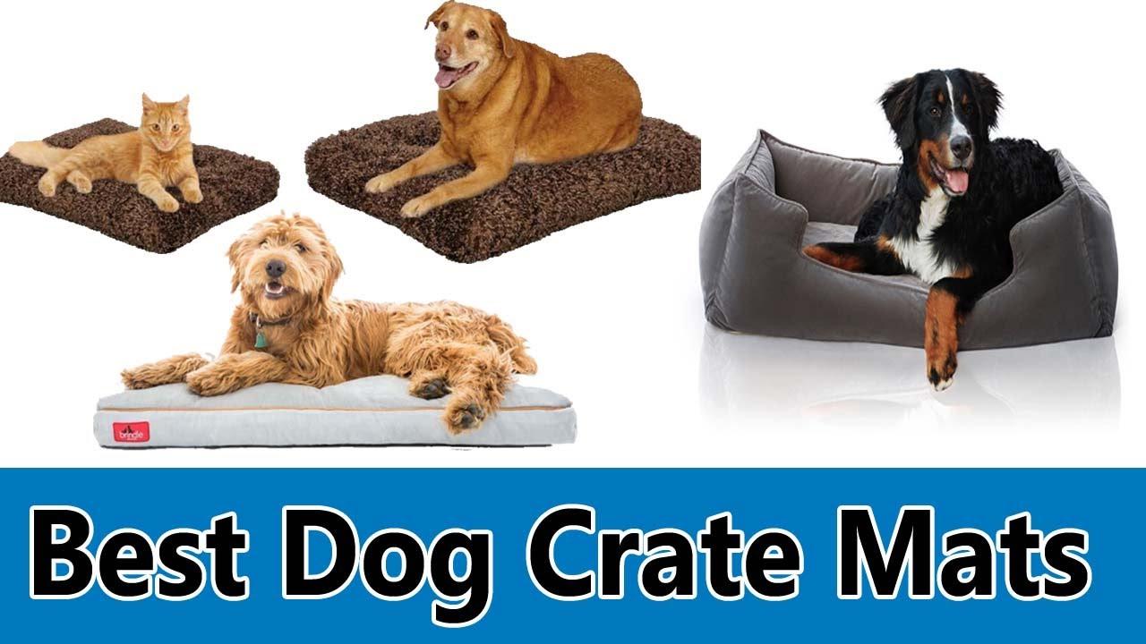 Best Dog Crate Mats Top 5 Best Dog Crate Mats Review Youtube