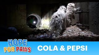 Hope For Paws: Bonded poodles struggling to survive in a sewer get a heartwarming rescue