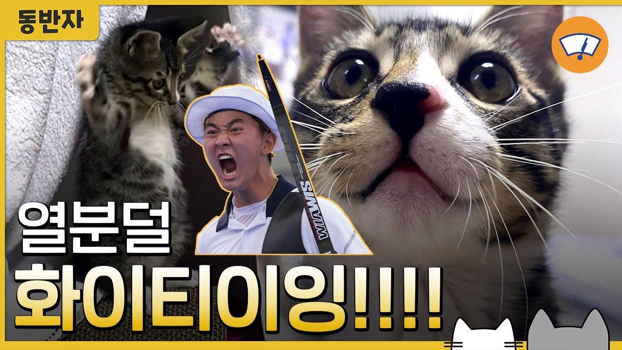 [동반자] 고양이 계의 김제덕! '도미'의 화이팅 #Shorts / 와이퍼