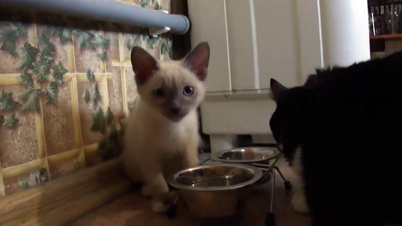 Большой котище и Маленький котенок