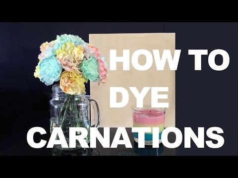 HOW TO DYE CARNATIONS FLOWERS