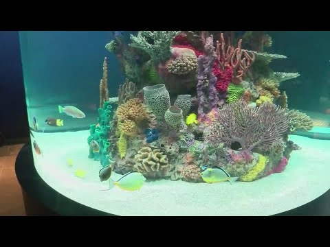 Electric City Aquarium Opens