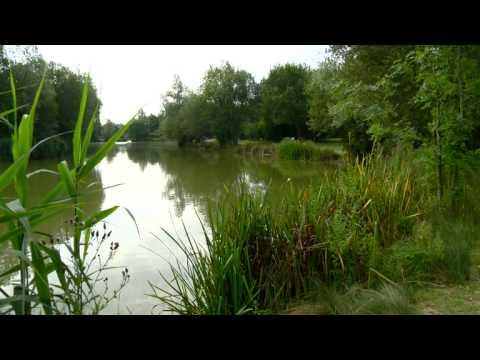Birds Green - Carp TV Fishery Focus