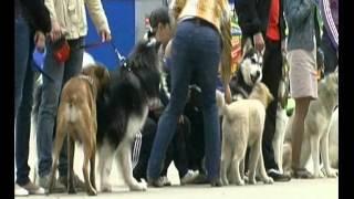 Выставка собак. 2 июня, Сыктывкар. Путешествуем по Коми.