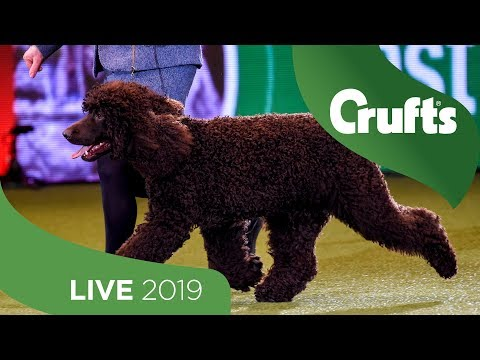 Crufts 2019 Day 1 - Part 3 LIVE