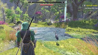 Jim Lettuce Plays |Elder Scrolls Online