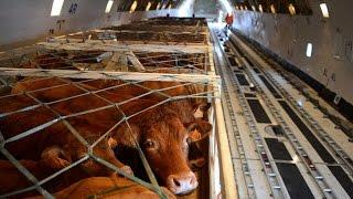Транспортировка животных