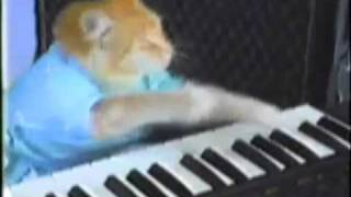Keyboard Cat sits in with KWJAZ
