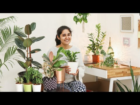 5 Air Purifying Indoor Plants for Styling Your Home   स्टाइलिश हवा शुद्ध करने वाले पौधे