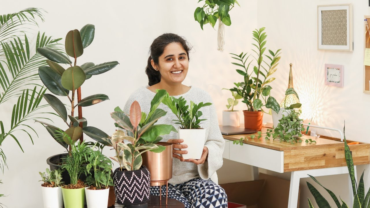 5 Air Purifying Indoor Plants For Styling Your Home स ट इल श हव द ध करन व ल प