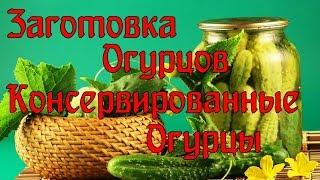 Рецепты консервации огурцов для новичков   Консервированные огурцы без сахара.