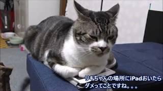 リキちゃんのお耳が~!!!! ※最新のお知らせなどはTwitterやGoogle+...