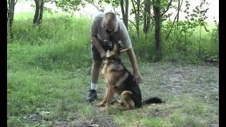 Дрессировка собак  ОКД собак:  чередование активности и торможения