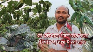 যেভাবে পটল চাষ করে বিঘায় ২ লাখ টাকা লাভ করেছেন- আনোয়ার, Parble Cultivation