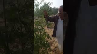 राजस्थान में बेरो की बौछार