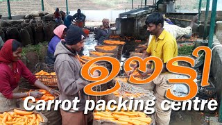 Favorite of Ooty Farmers| Ooty Carrots | Packing center | Tamil Nadu |
