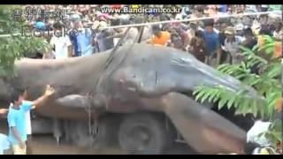 Vietnam Monster, Dinasour, Worm, Whale - Found 20 Nov 2013