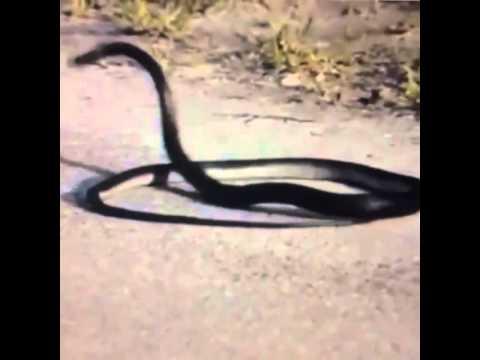 I'm a snake vine