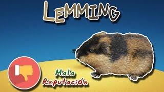 Lemming |Uno de los más grandes mitos | (Animales del Mundo) |Mes de la mala reputación|