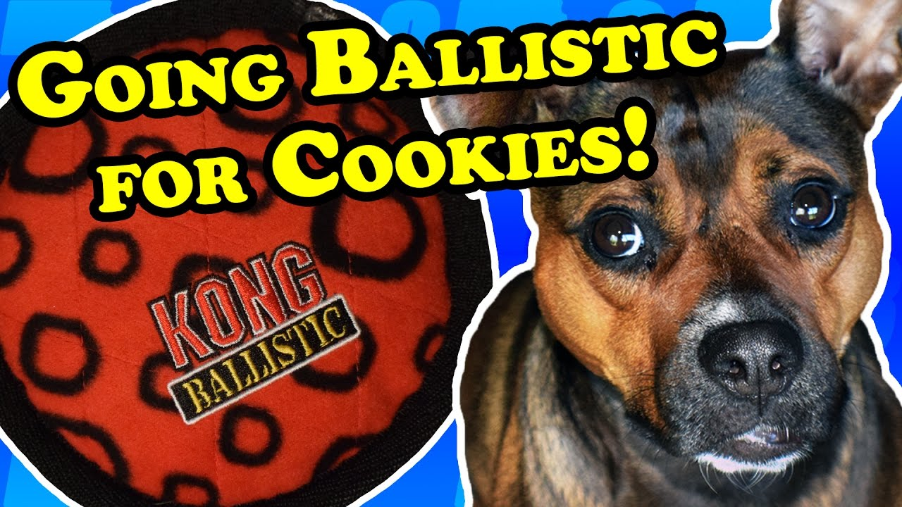Story goes ballistic for this kong tough cookie dog toy for Ballistic dog