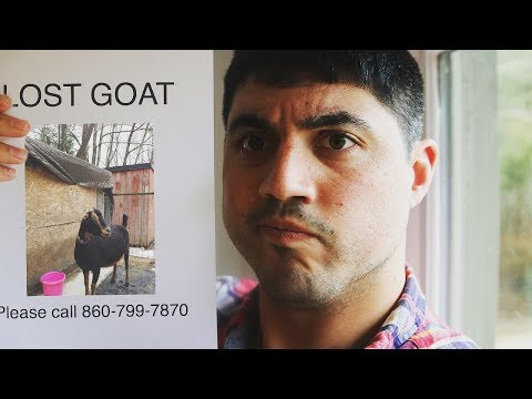 A NEW GOAT OWNER MISTAKE I WILL NEVER MAKE AGAIN!