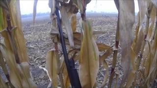 Goose Hunting 2013 GoPro - 11 Shot - Teach me your ways Goose-Masta