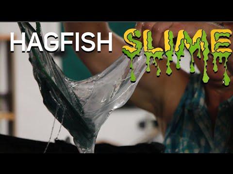 Hagfish Slime at Gulf Specimen Marine Lab