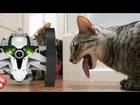 CAT VS DRONE!!!