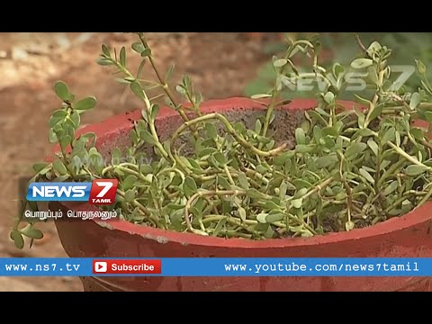 Neer Brahmi plant - Keep this doctor at your home  | Poovali | News7 Tamil